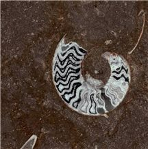 Gran Fossil Marble