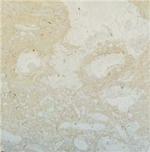 Mexican Coral Stone