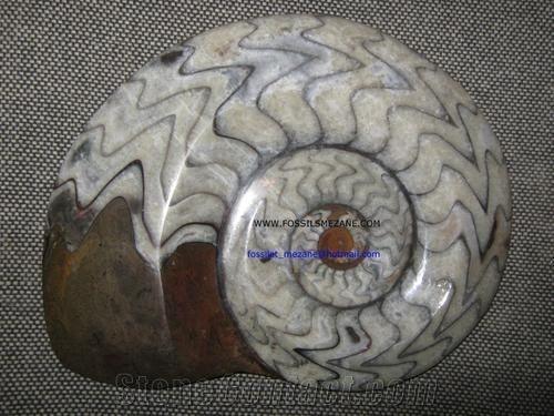Fossil Stone Ammonites Brown Limestone Artifacts