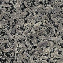 Grigio Scuro Granite Slabs & Tiles, China Grey Granite