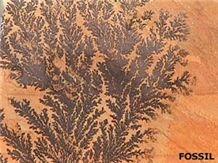 Fossil Sandstone Slabs & Tiles, India Beige Sandstone