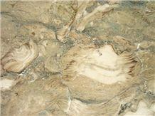 Fossil Beige Limestone