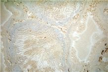 Natural Saw Cut Beige Coral Stone Tile