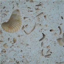 Texas Shell Limestone Tile, United States Beige Limestone