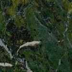 Birjand Pitsh Green Granit, Iran Green Granite Slabs & Tiles