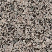 Vozrojdenie - (Vozrozhdenie), Russian Federation Grey Granite Slabs & Tiles