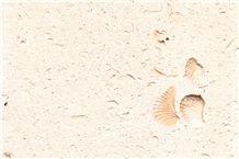 Cordova Shell Limestone Slabs&Tiles