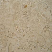 Coralina Shellstone Limestone Slabs & Tiles