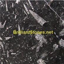Morocco Black Fossil Marble Slabs & Tiles