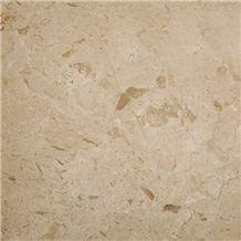 Plato Cream Medium Shell Marble Slabs & Tiles