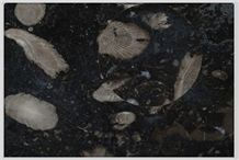 Frosterley Marble Tiles