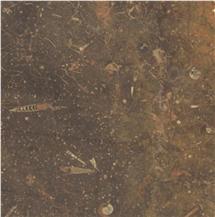 Castellon Fossil