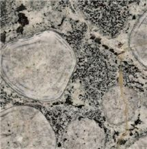 Diorite Orbiculaire - Grey Granite - StoneContact.com