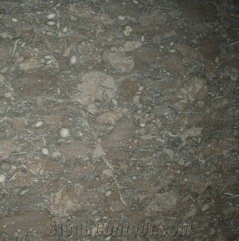 Ocean Fossil Marble Green Marble Stonecontact Com