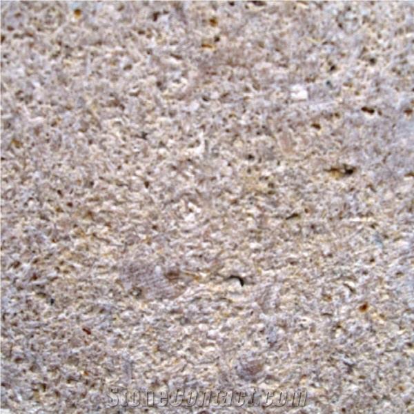 Permian Sea Coral Beige Coralstone Stonecontact Com