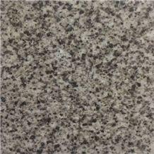 Grey Aswan Granite Slabs
