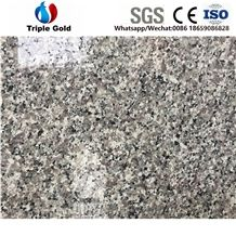 G436 Grey Bala Barry Blue Swan White Dallas Granite Goose Tiles,Slabs