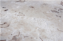 Kanfanar Shells - Brushed Limestone Tiles, Slabs