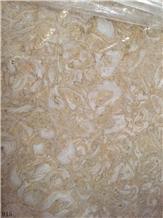 Shells Reef Gold Limestone Golden Shell Marble
