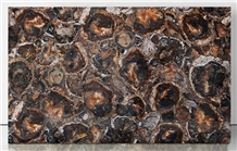 Natural Gemstone Wood Fossil Stone Petrified Wood