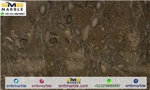 Polished Fossil Brown , Pakistan Grey Limestone
