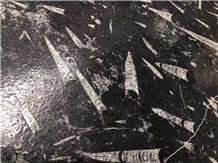 Fossil Black Marble Polished Slabs Tiles