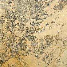 Dendrite Ferns