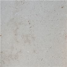 Shell Beige Limestone